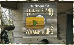 Dr Wagners Honey Isand Swamp Tours